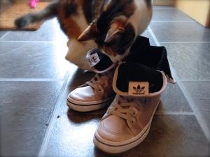 adidas Orignials Honey Hi - even cats love them
