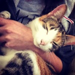 Ida Cat on Lap