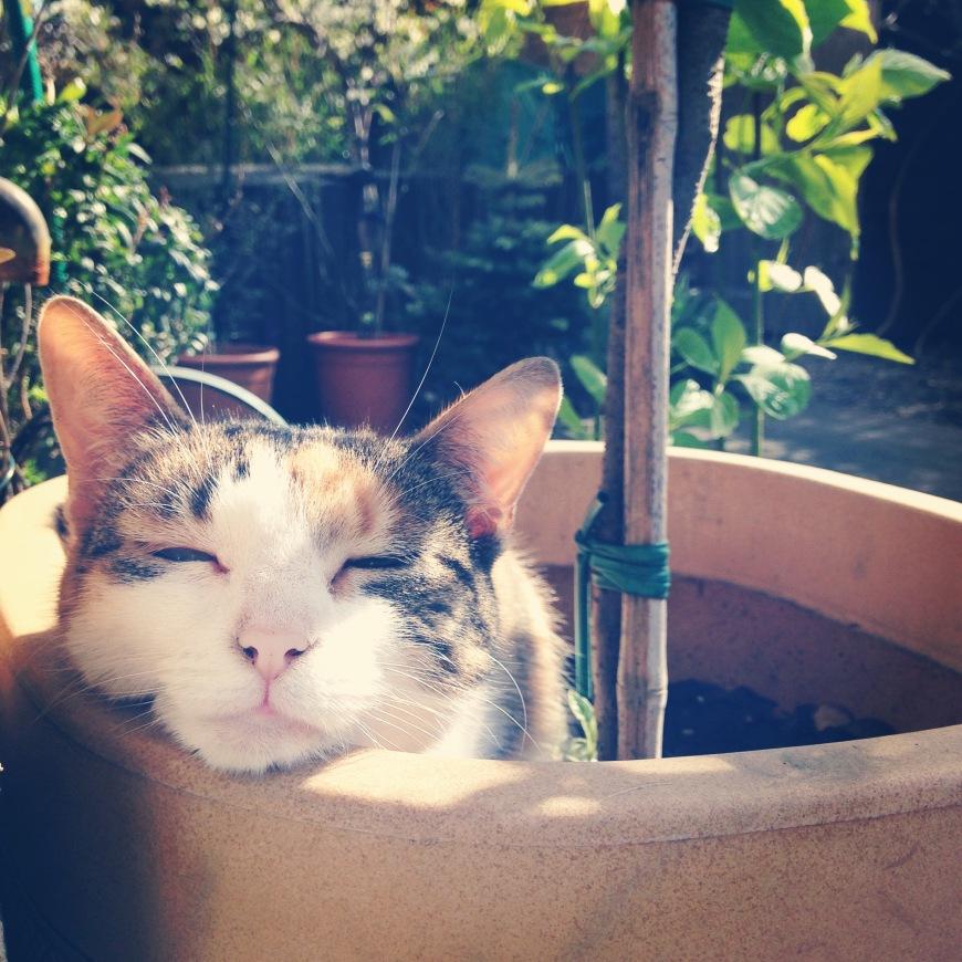 happy sunny garden cat