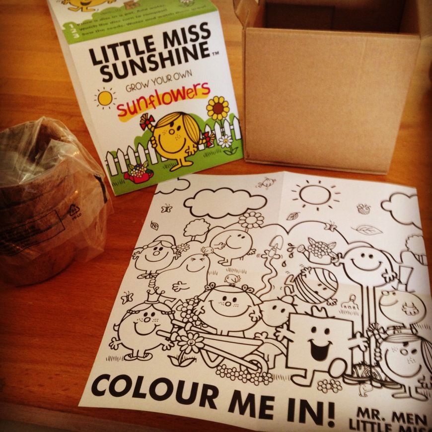 little miss sunshine grow your own sunflowers